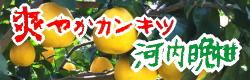 爽快柑橘 河内晩柑