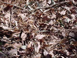 腐葉土と落葉
