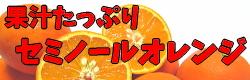 セミノールオレンジ♪