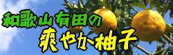 爽やか柚子(ユズ)